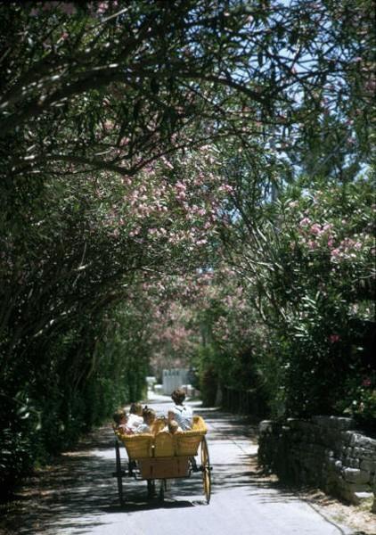 Oleander Drive