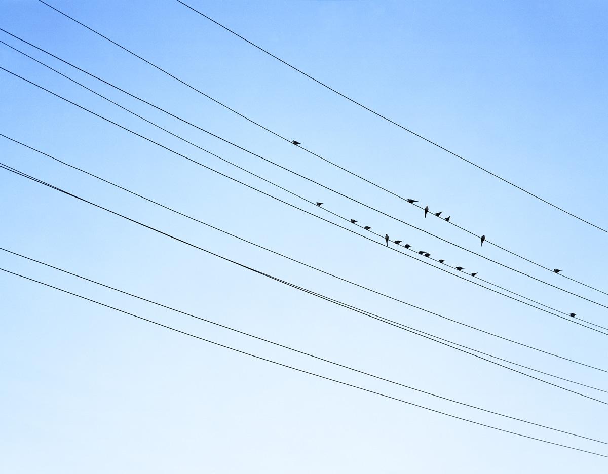 Resting Birds