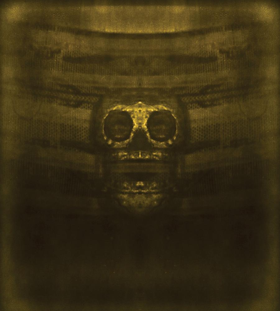 Skull, 2008