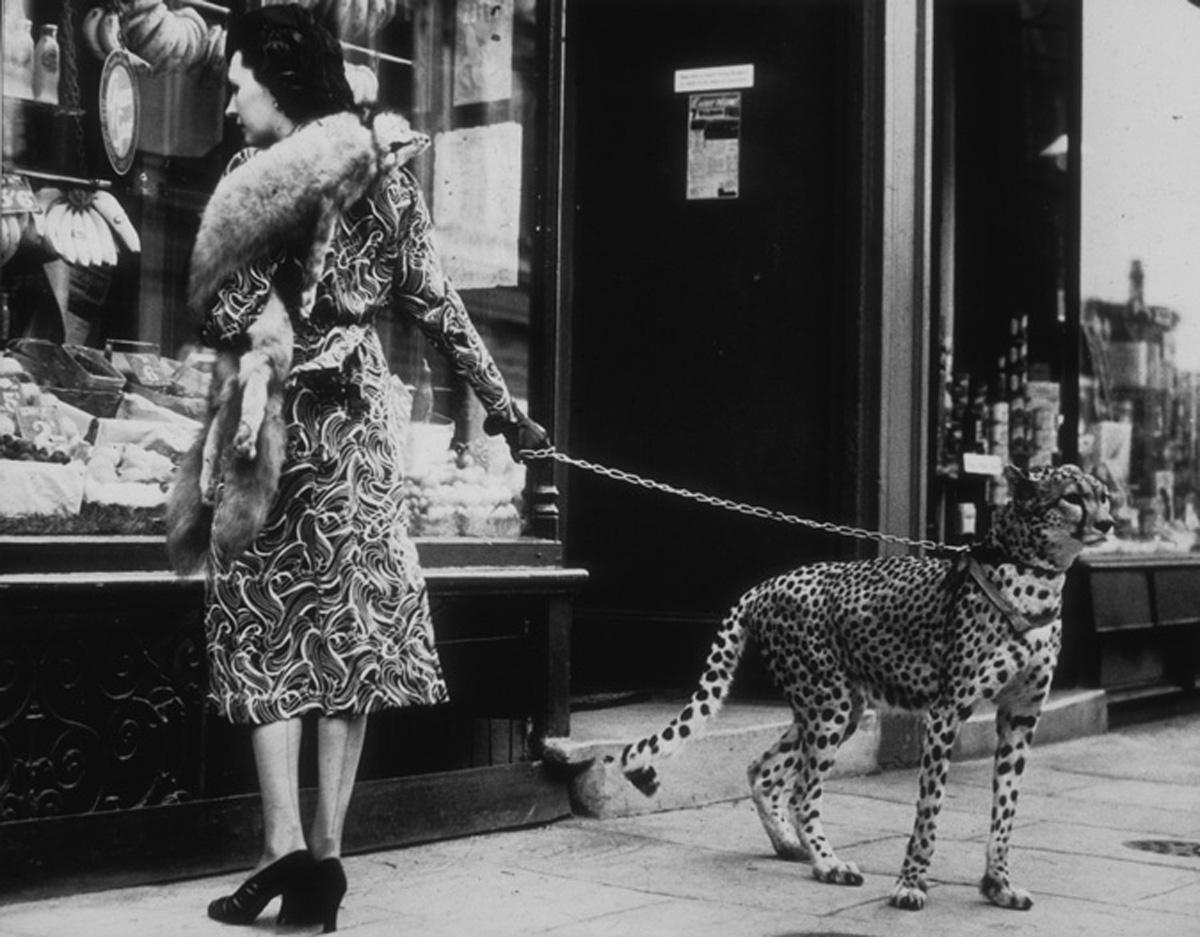 Cheetah Who Stops