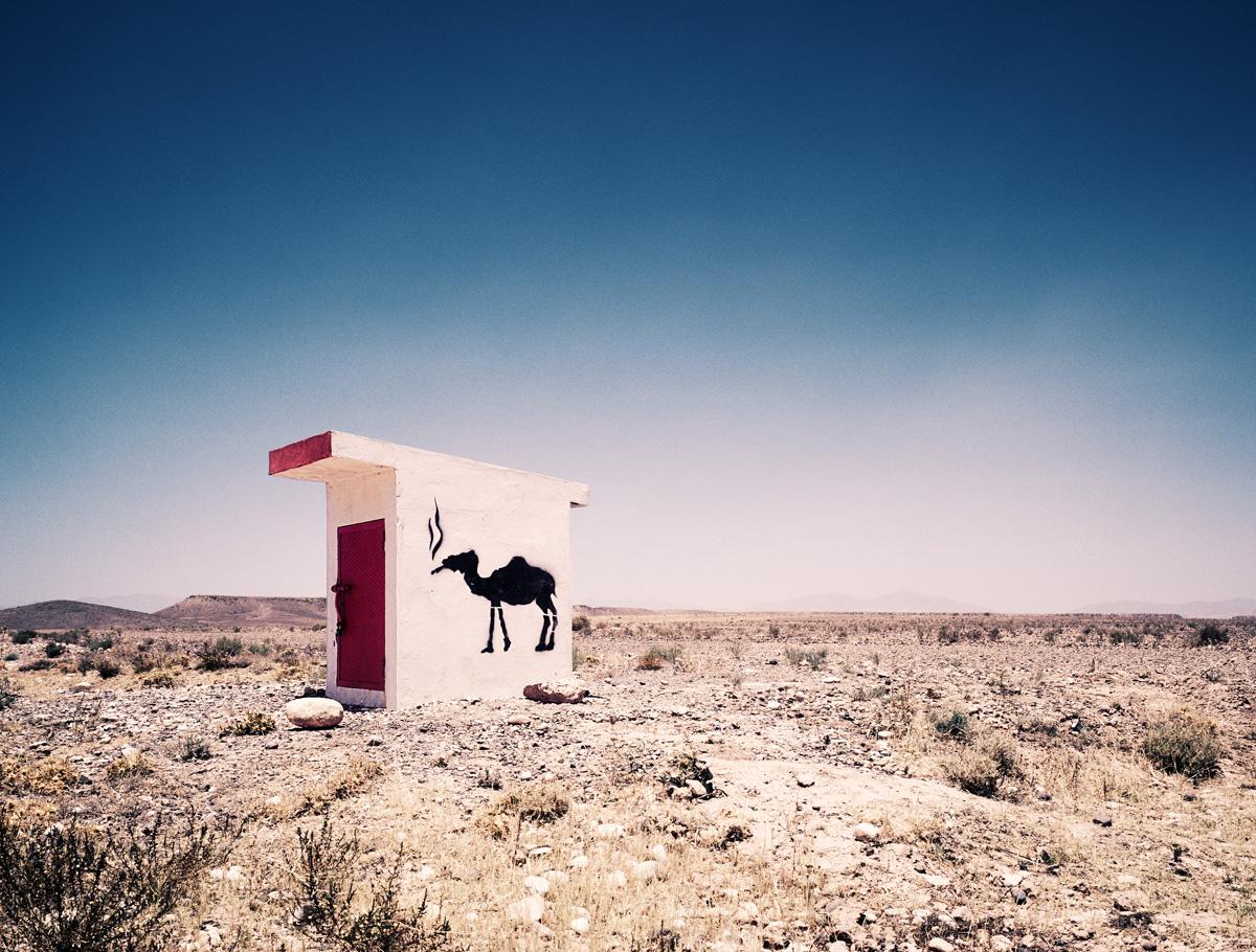 Camel Grafitti, 2005