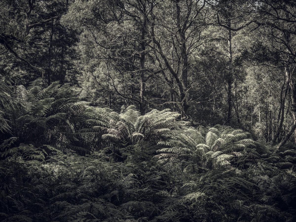 Fern Forest 3