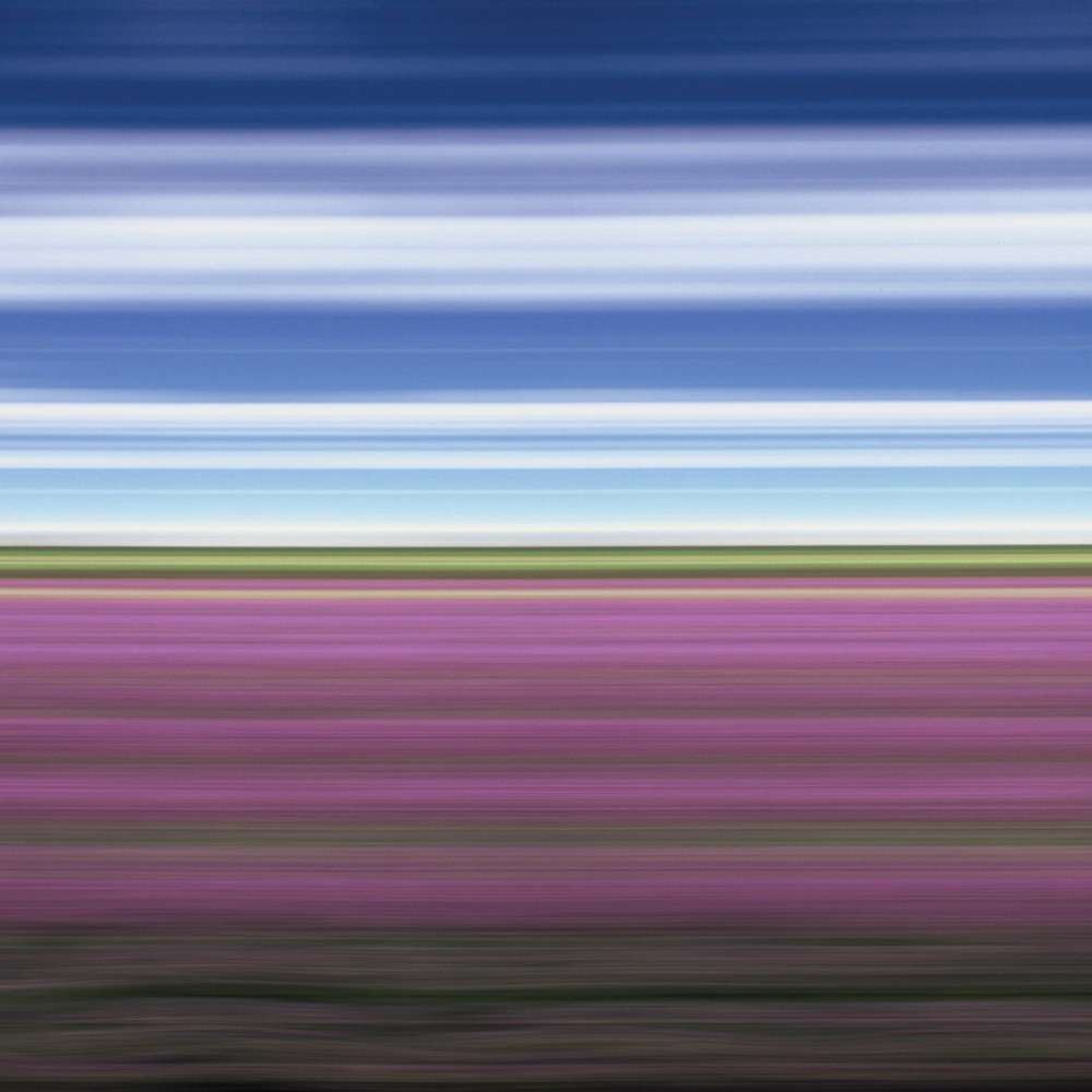 Lavender Field II, North Yorkshire