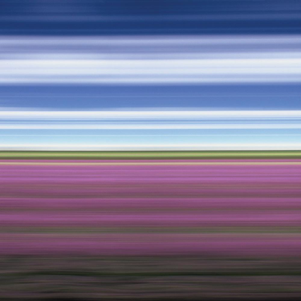 Lavender Field II, North Yorkshire
