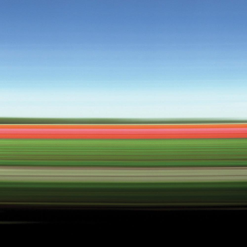 Tulip Fields I, 2004