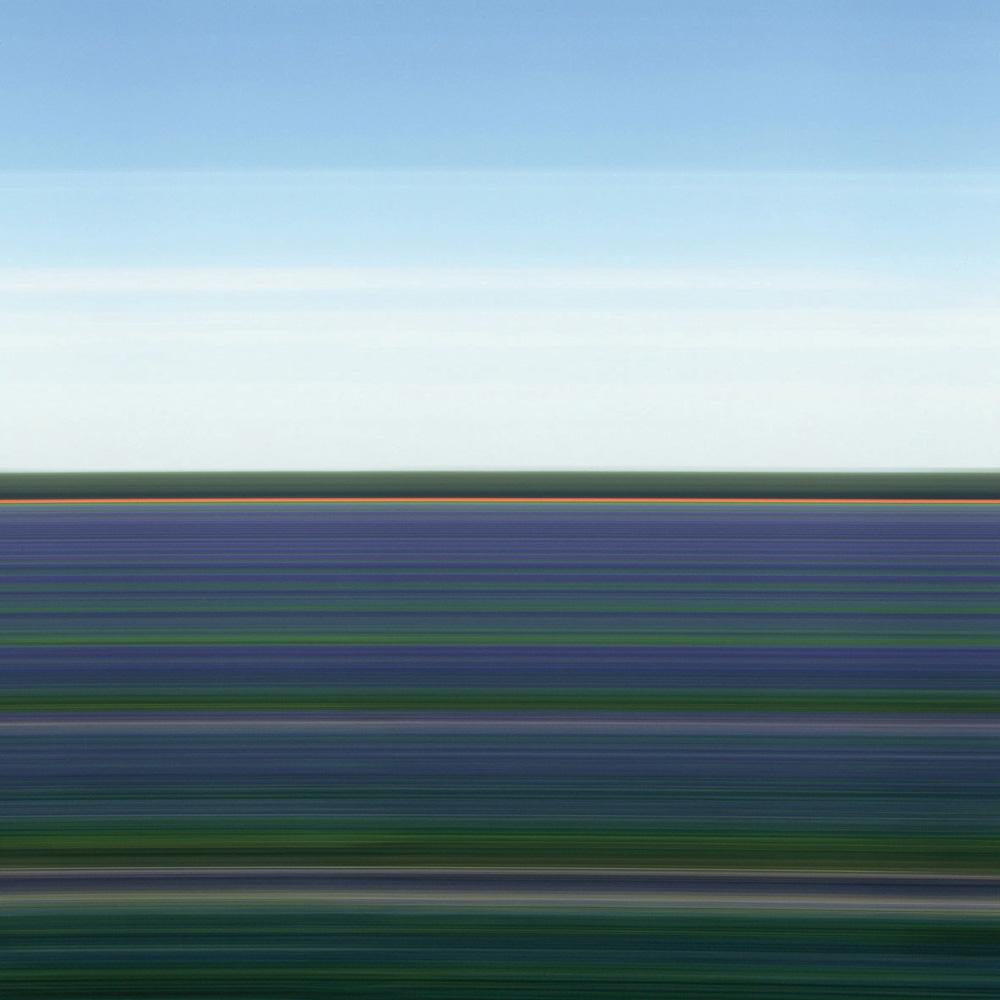 Tulip Fields XVI, 2006