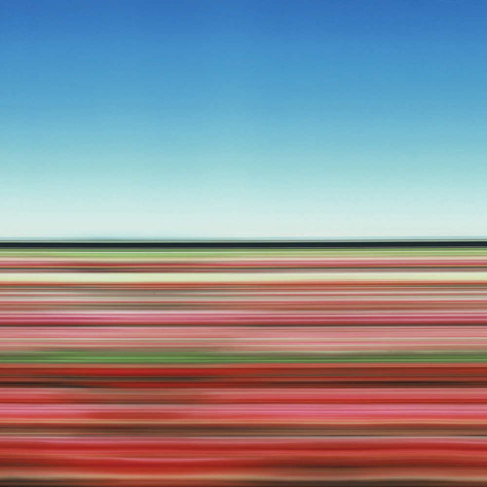 Tulip Fields XXX, 2007