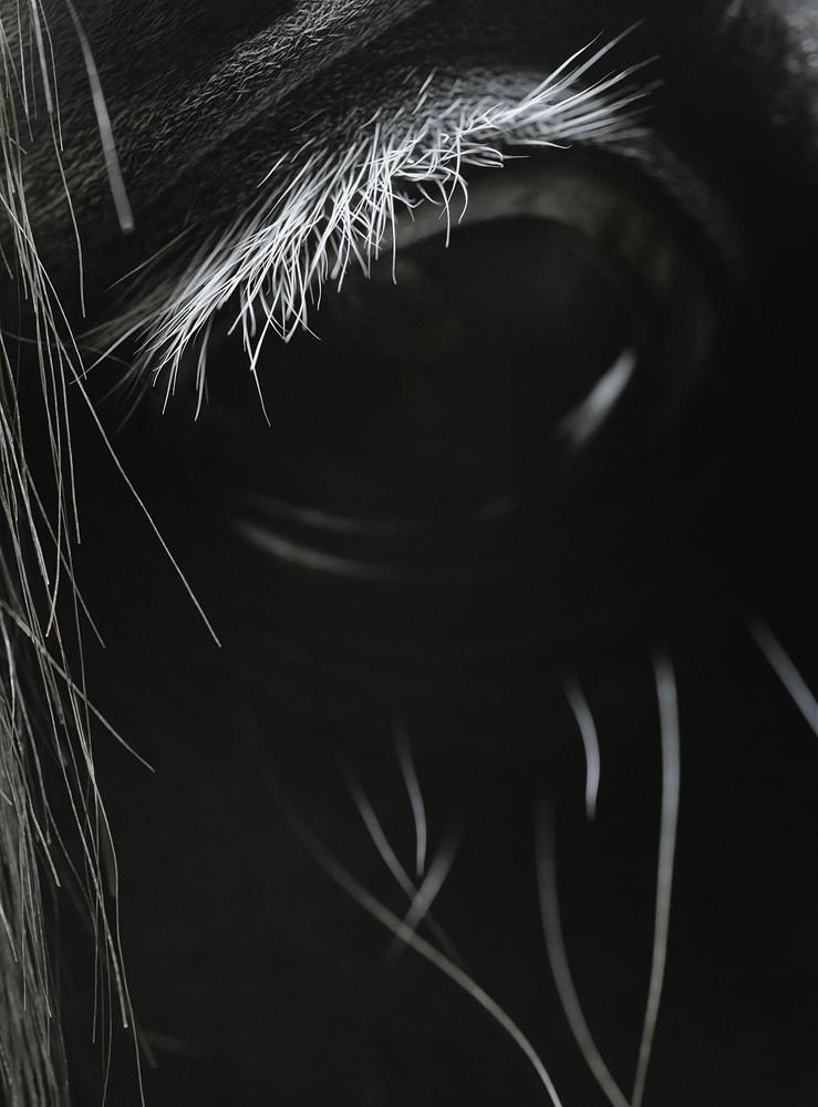 Elwia's Eyelashes