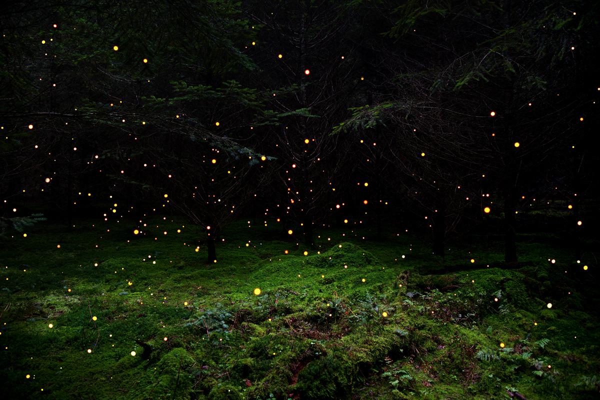 Stars 5, 2014