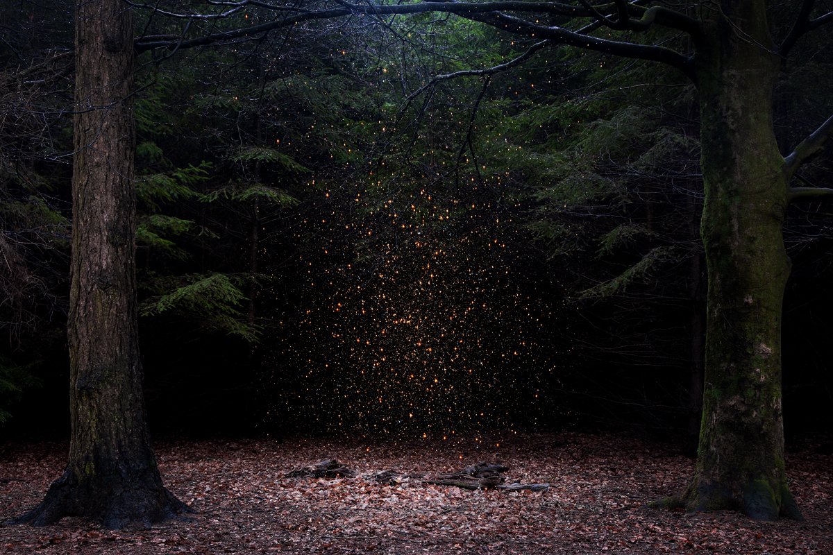 Stars 8, 2014