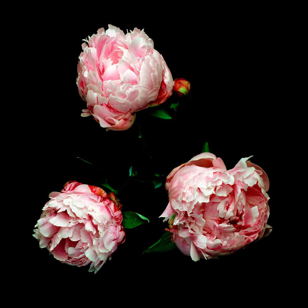 Floriculture A12