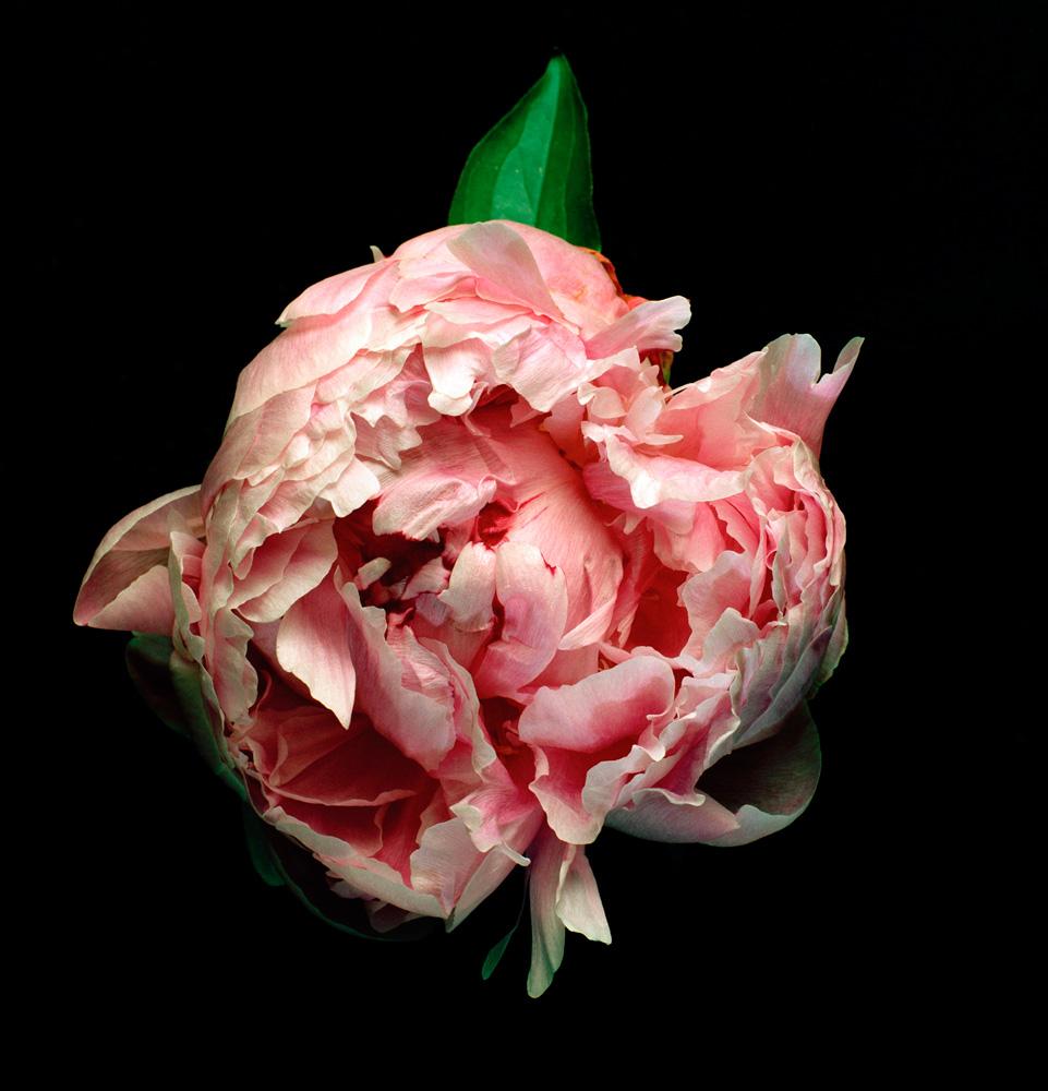 Floriculture A13