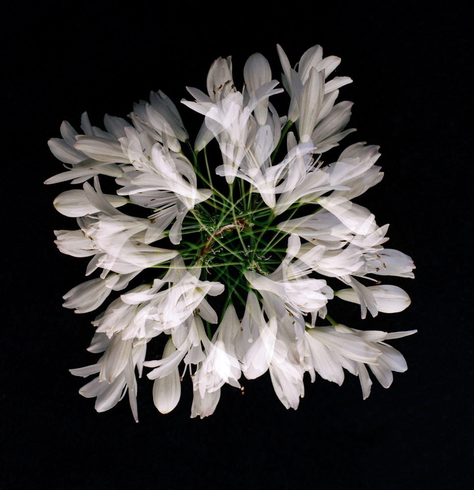 Floriculture B3