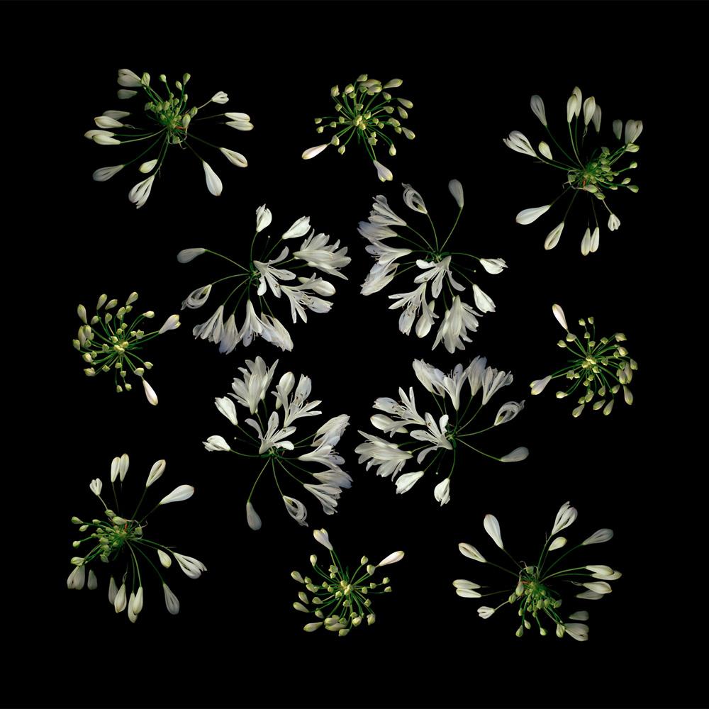 Floriculture C16.3