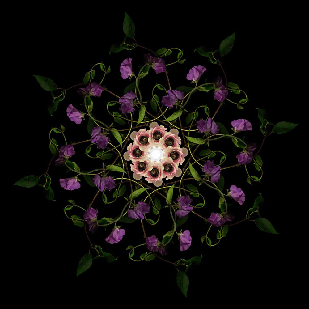 Floriculture F10.1.3