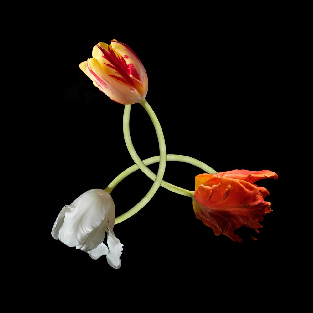 Floriculture F3