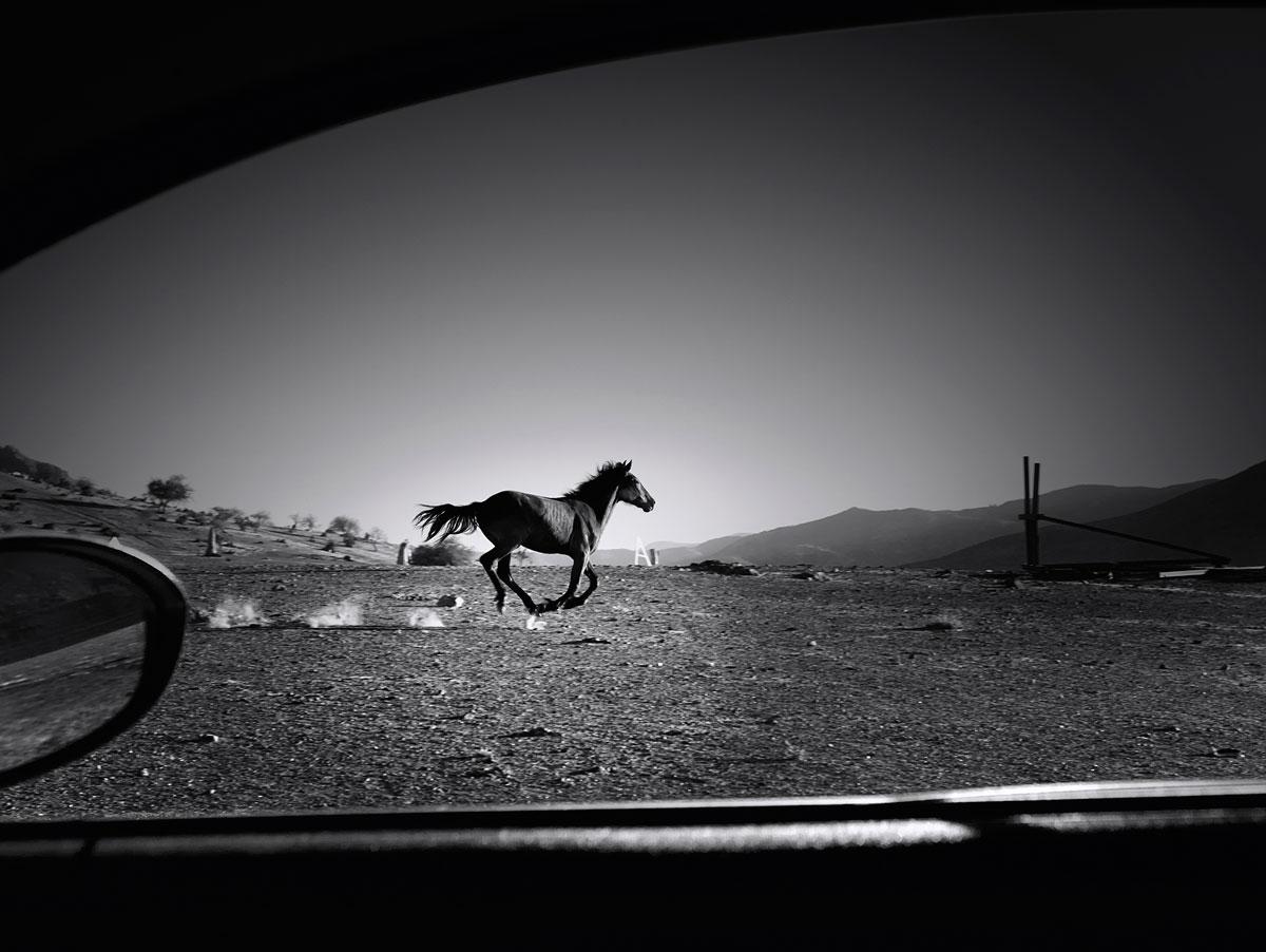 Horse, Chile, 2014
